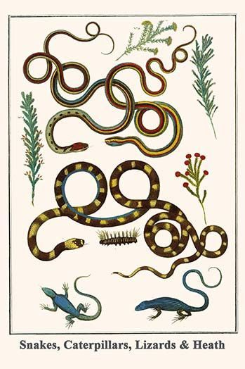 Snakes, Caterpillars, Lizards & Heath
