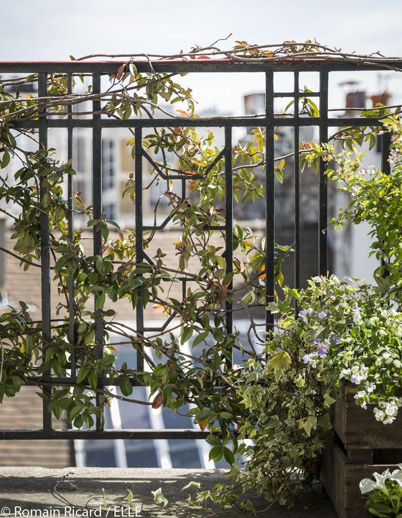 Comment Jardiner Du Balcon Au Salon Les 10 Commandements Deco Du