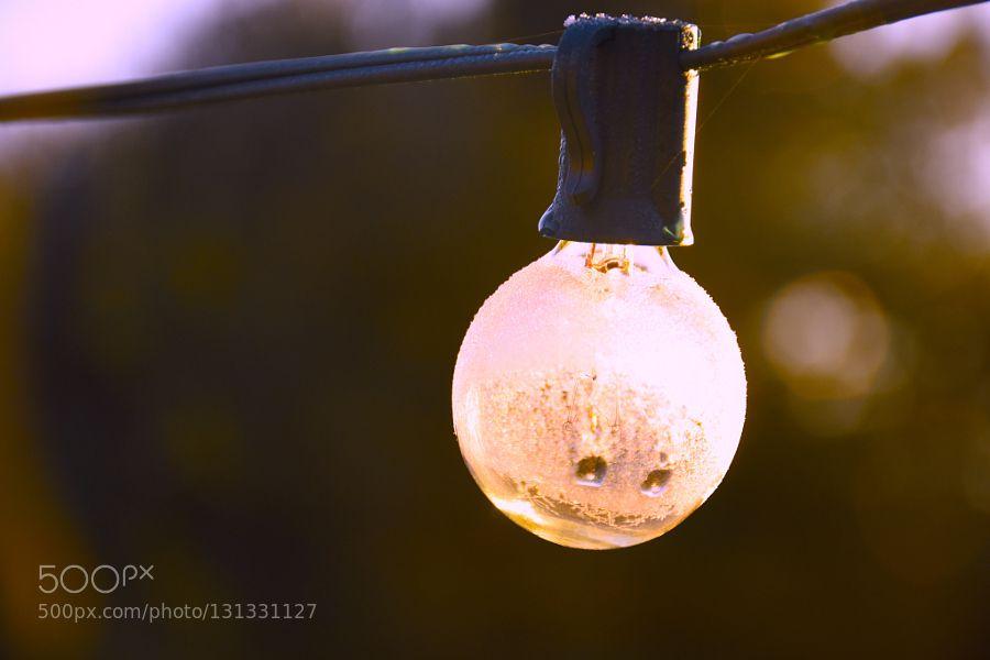 Frozen Bulb by wbeckett