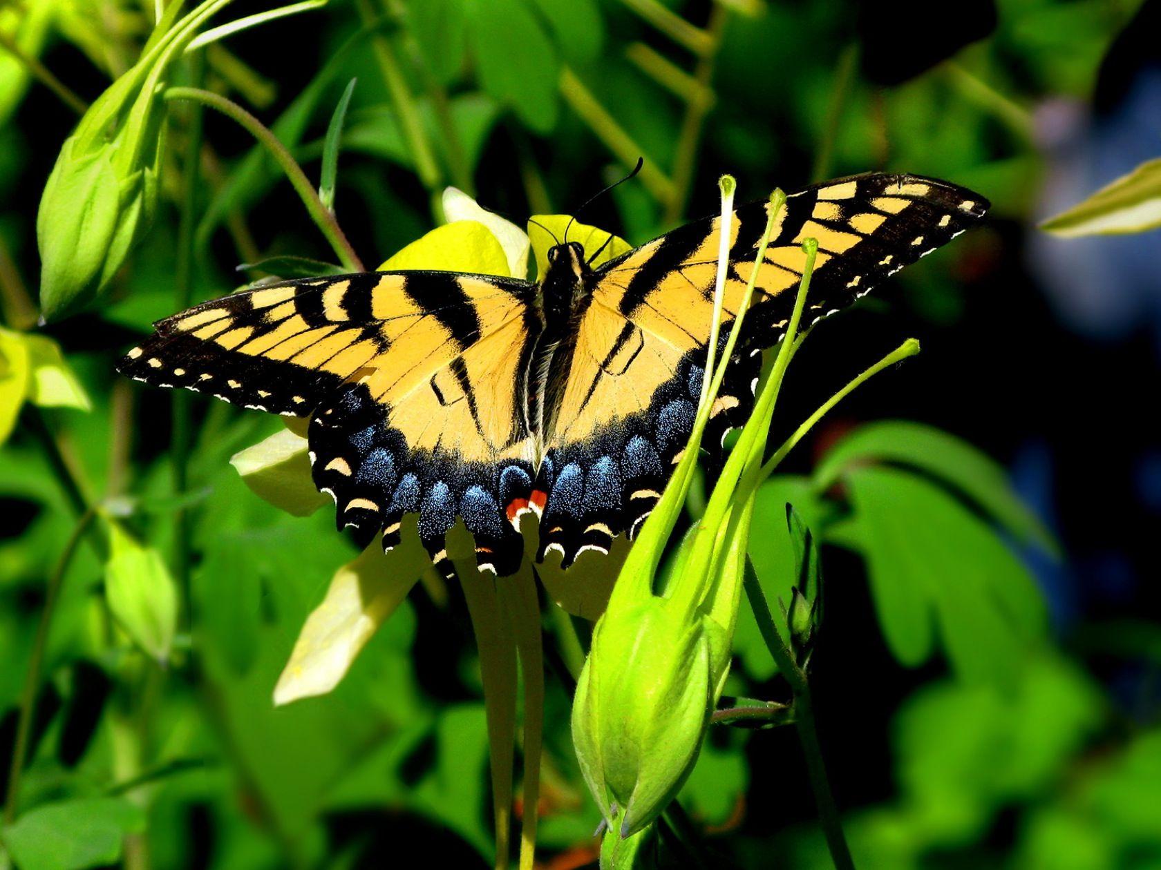 Orange Butterfly Wallpaper 2560x1440   Orange butterfly ...