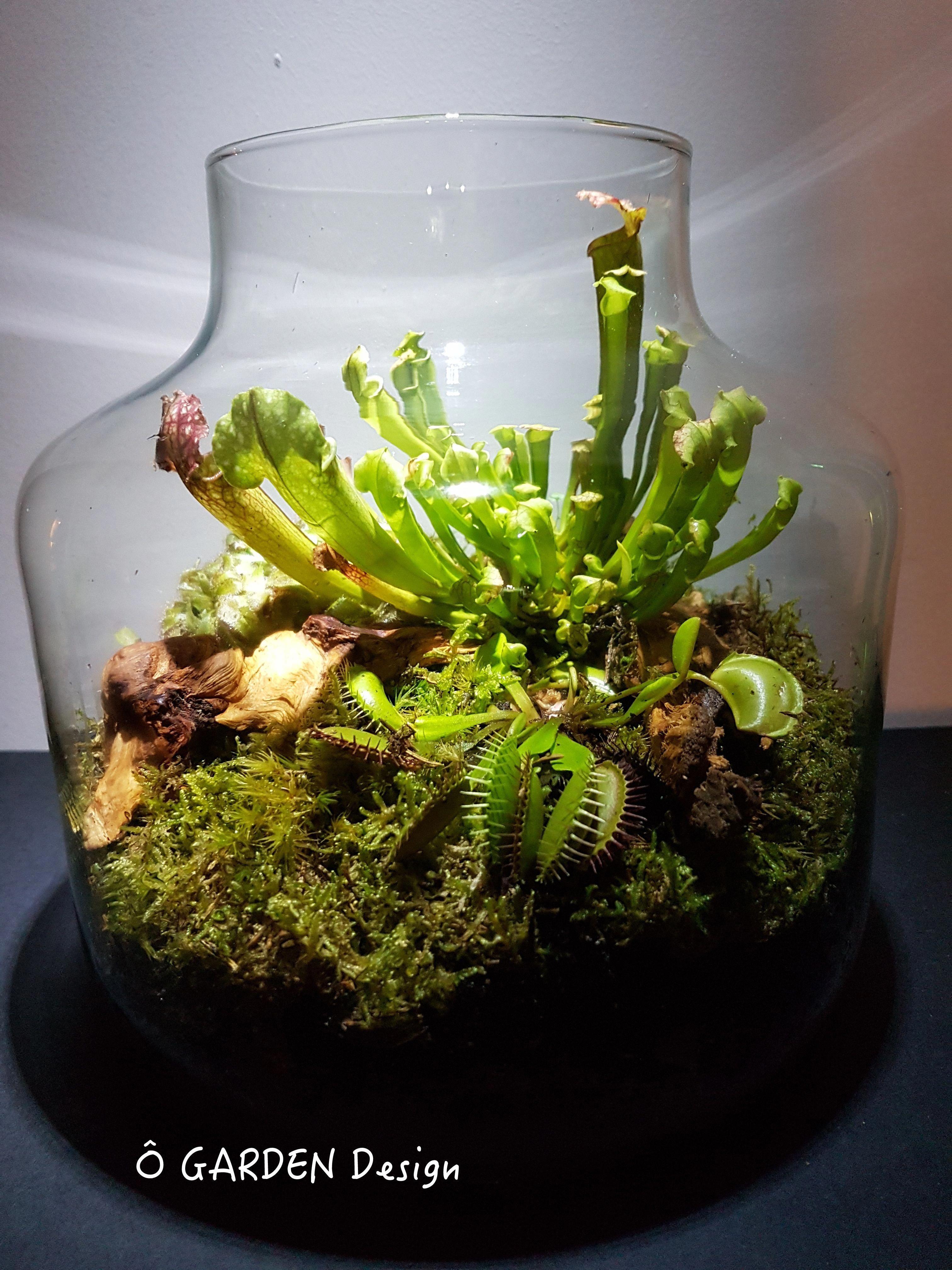 Unique Closed Glass Terrarium Ideas For Plant Tallterrariumideas
