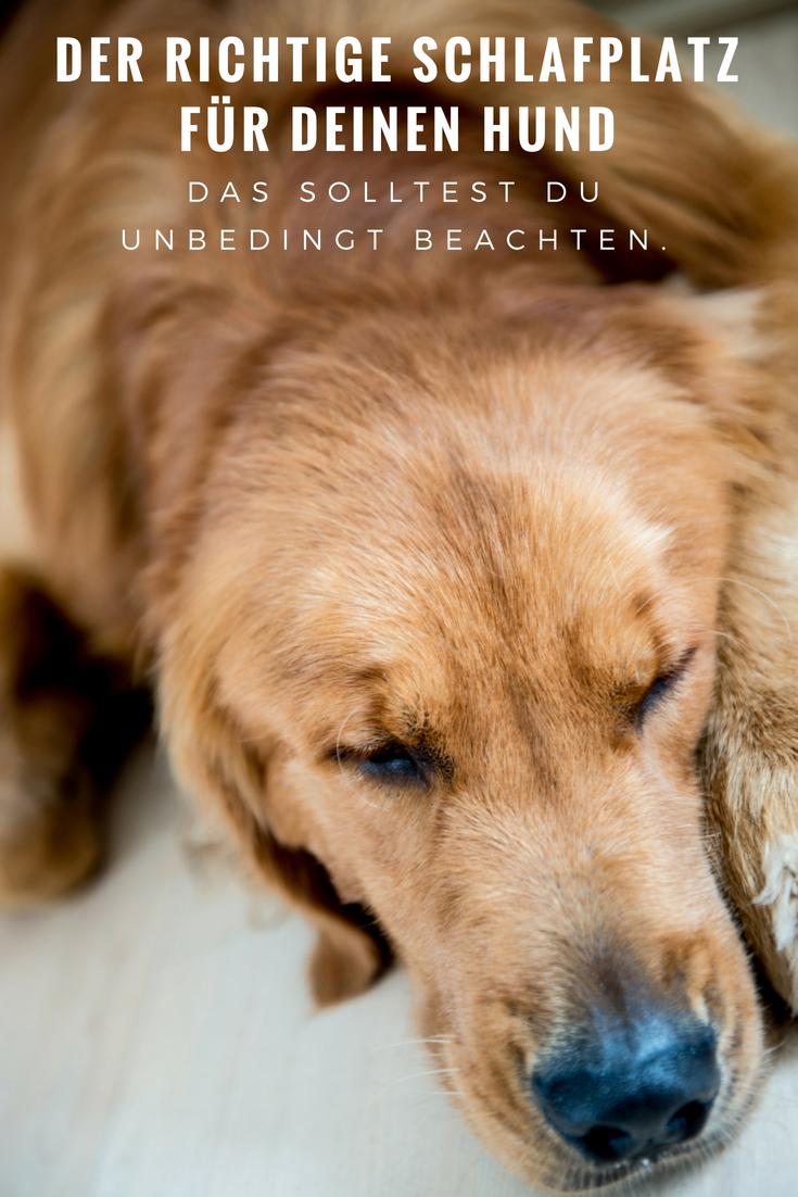 Der Richtige Schlafplatz Fur Deinen Hund Das Solltest Du Beachten Hunde Hunde Schlafen Gesunde Hunde
