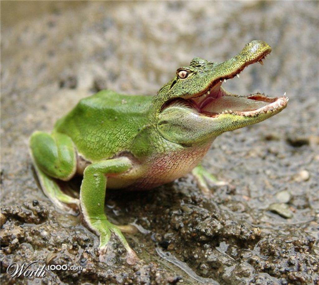 These Hybrid Animal Ideas Are Legitimately Awesome   Photoshopped animals, Animal  mashups, Funny animals