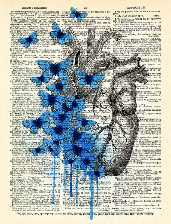 Heart Human Anatomy Butterfly Anatomical Heart Print On Vintage