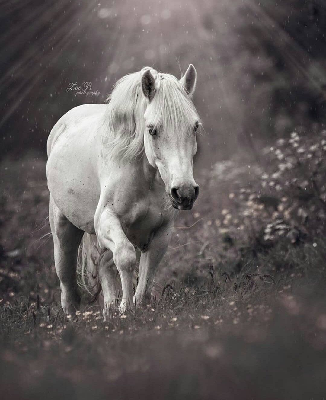 Pin By Nancy On Horses Horse Breeds Horses Horse Pictures