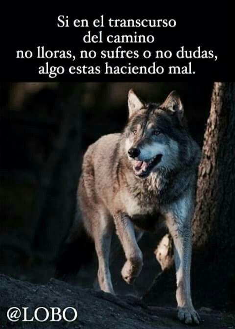 No Es Fácil Frases De Lobos Lobos Y Cotizaciones Wolf