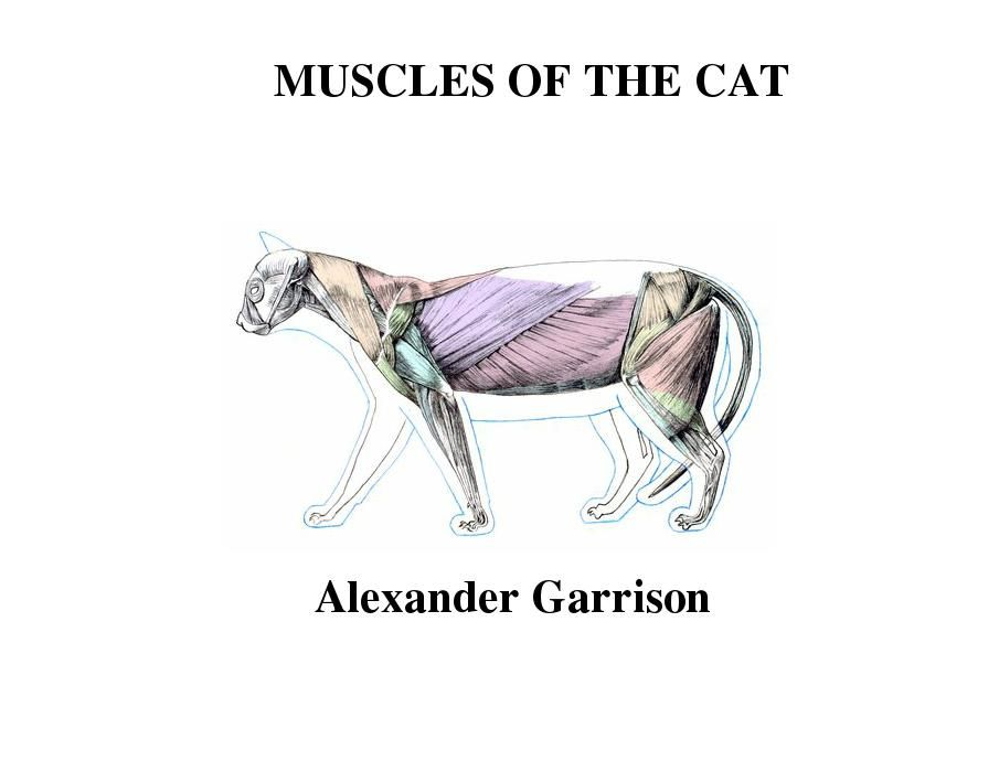 Muscles of the cat - made with simplebooklet.com | Anatomy ...