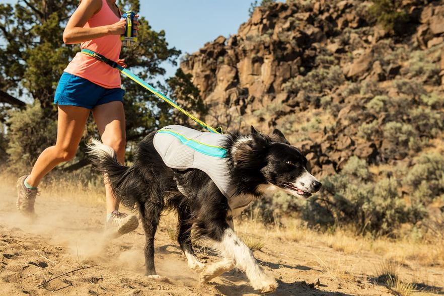 Swamp Cooler Dog Cooling Vest Dog Vest Best Dogs Dogs