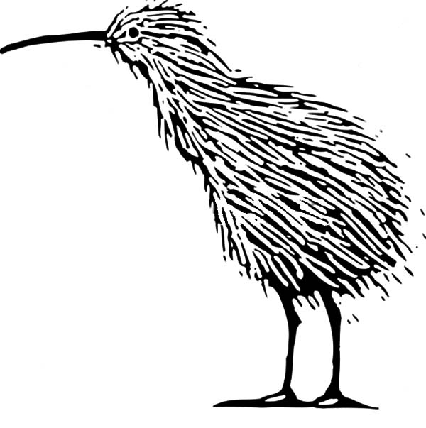 Alpha Male Kiwi Bird Coloring Pages Download Print Online Coloring Pages For Free Color Nimbus Bird Coloring Pages Online Coloring Pages Coloring Pages