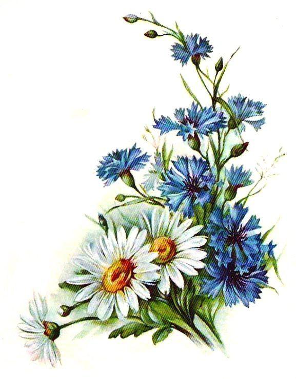 Днем рождения, открытка цветы нарисованные