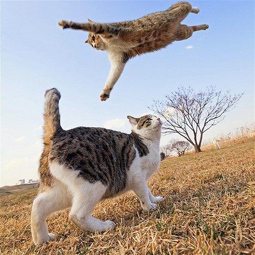 Image: Las mejores fotos de animales (© Seiji Mamiya/Caters News)