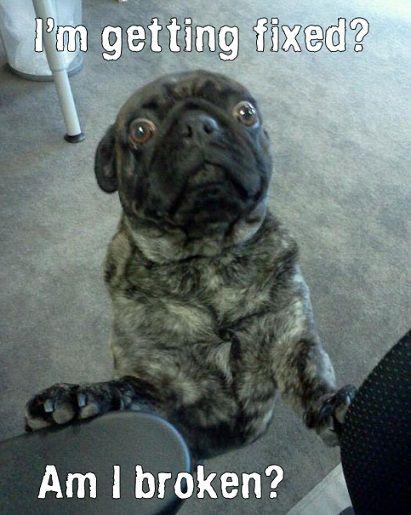 Dogaholic vinyl decal sticker funny pinterest cute dogs meme weird pets
