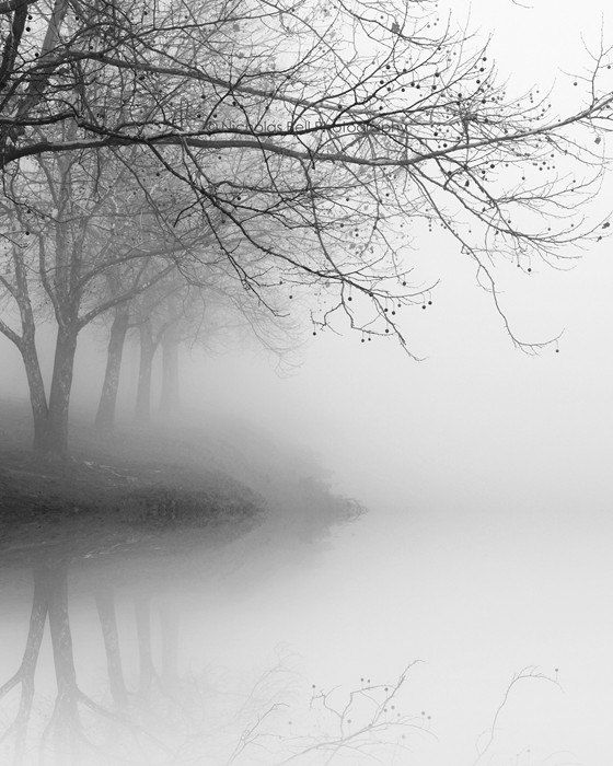 Black and white photography trees fog landscape nature winter tree reflections 8 x 10 print