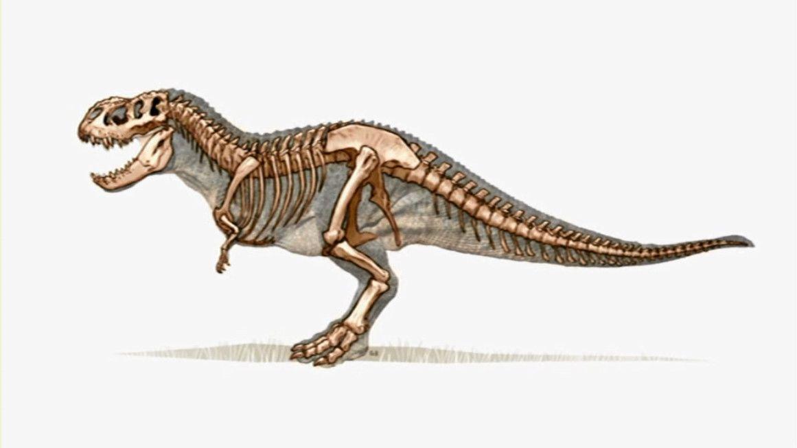 1161 x 653 jpeg 41kBVastatosaurus