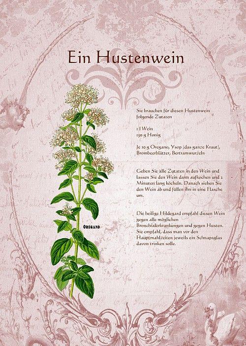 Ein Hustenwein Botanische Abbildungen Heilpflanzen Krauter Pflanzen