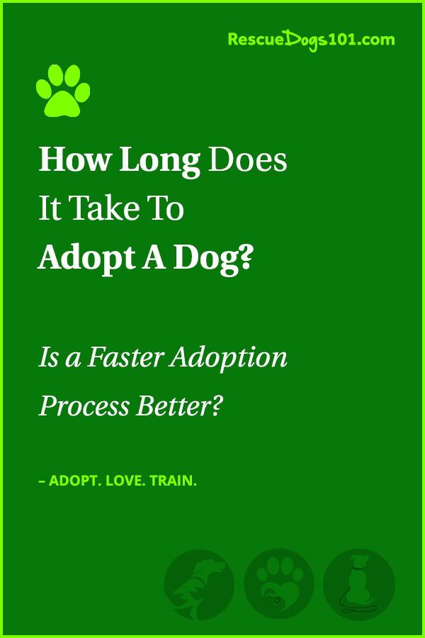 How Long Does It Take To Adopt A Dog? | Adoption, Dogs ...