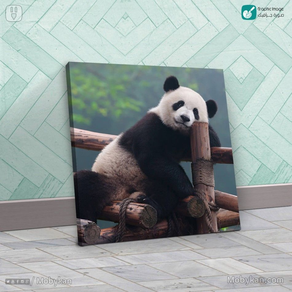 تابلوه الباندا الجميل Panda Bear Panda Animals