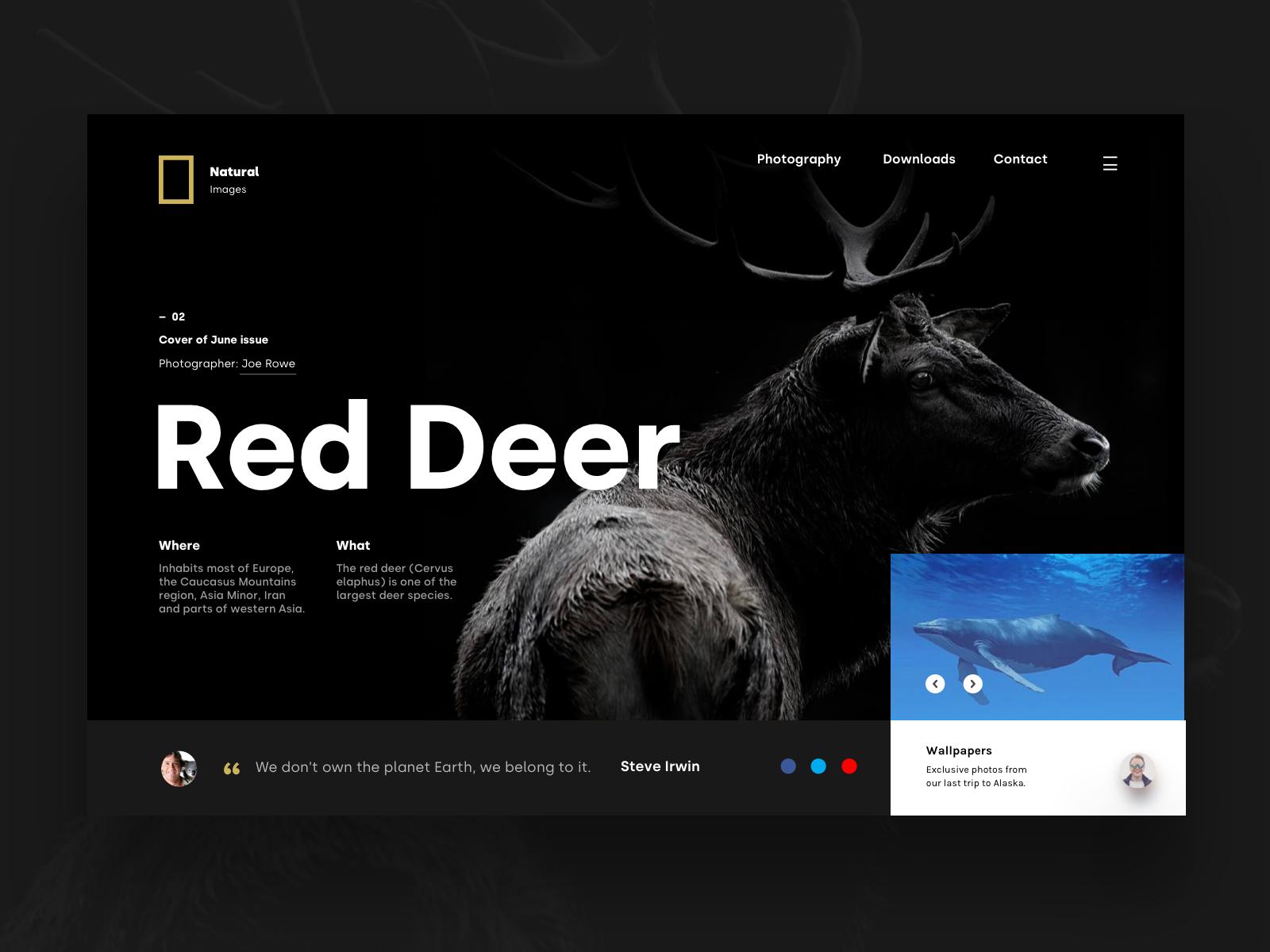 Red Deer Header Color Palette Design Image Layout Design