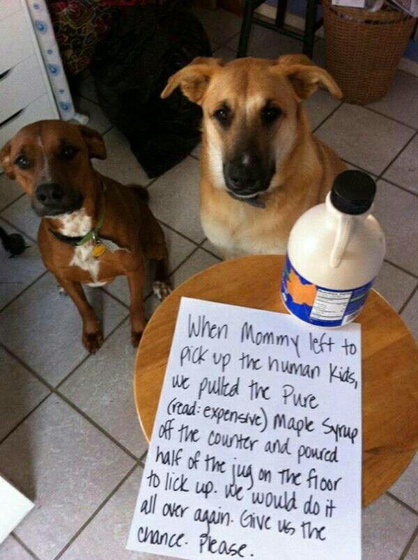 Dog shaming funny image by Victoria Lynn Mummert on