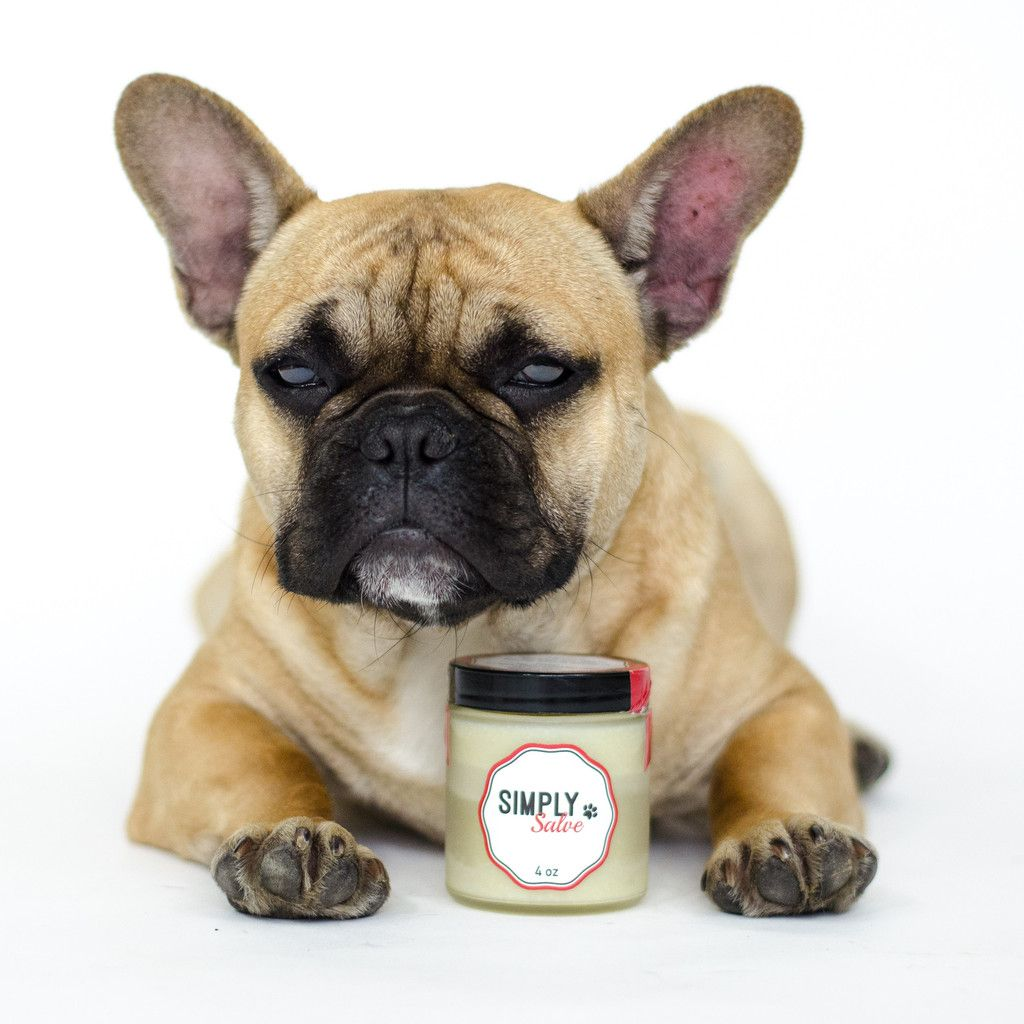 Marcel the Frenchie models Simply Salve a balm for dogs