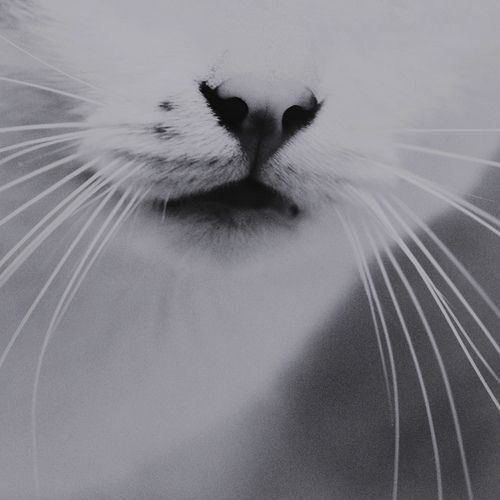 Tumblr vintage photography black and white black white black and white cat photography image 451599