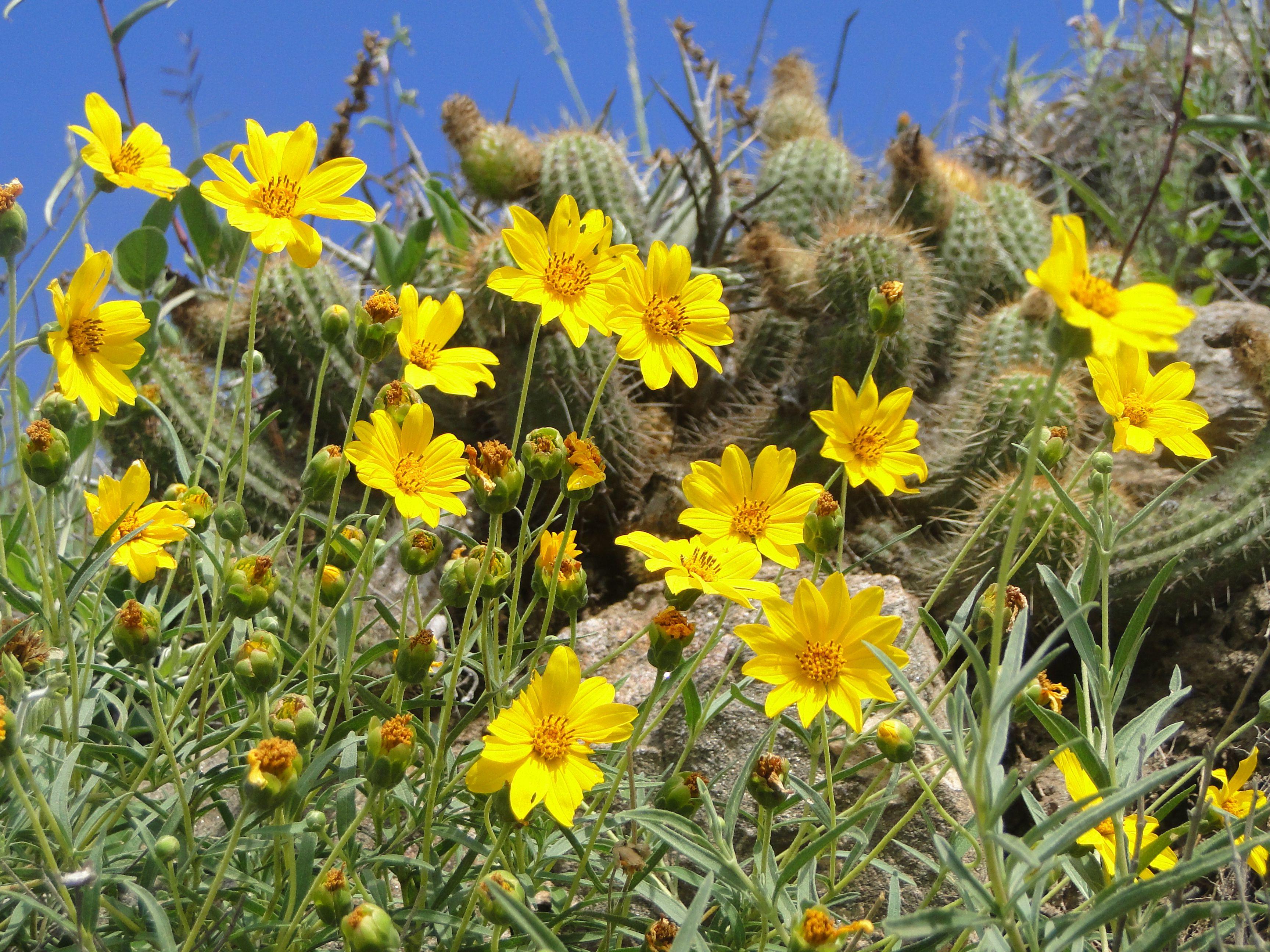 Flores Silvestres Amarillas Flores Silvestres Pinterest