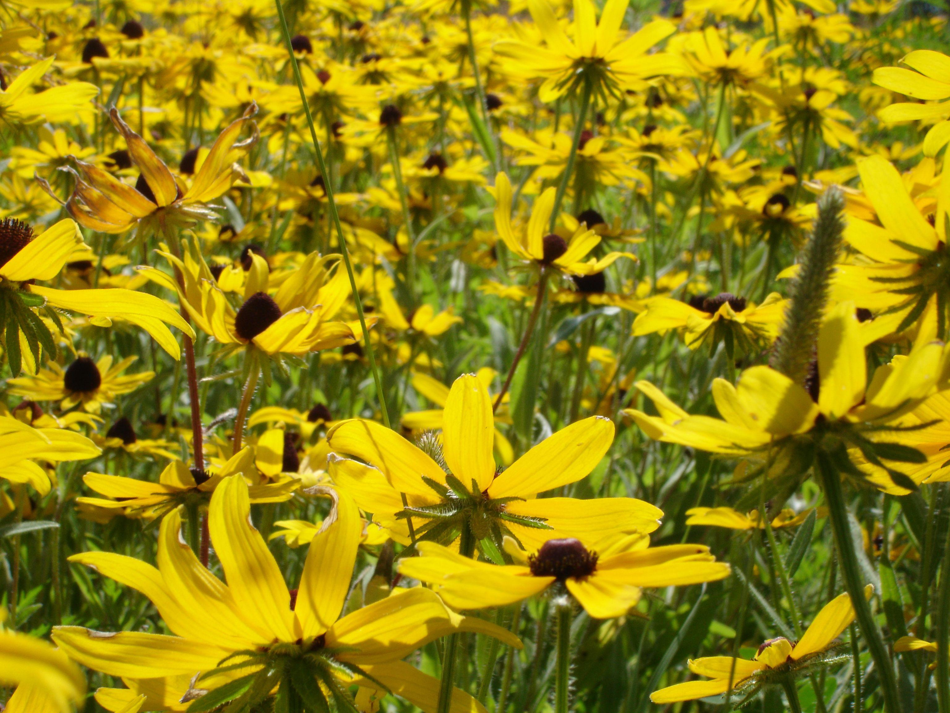 Patheos Prairie Flower Prairie Garden Tropical Art
