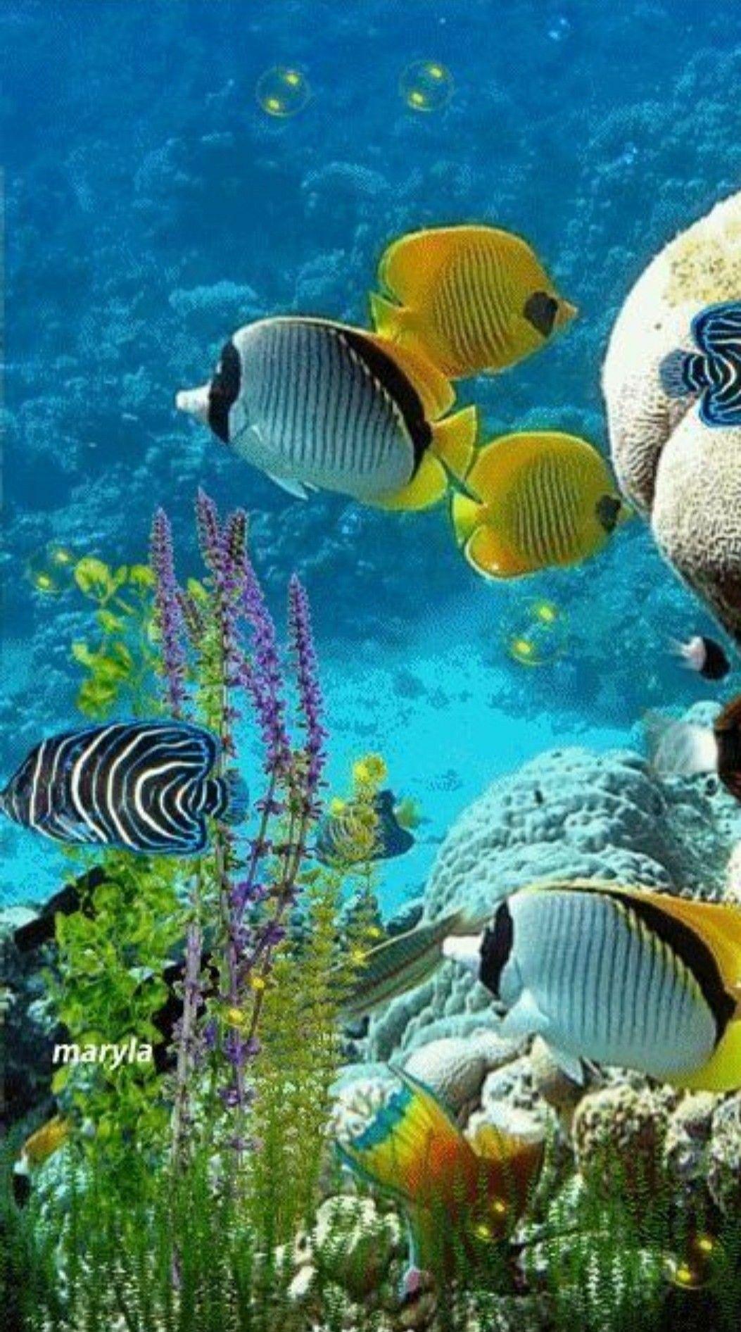 фотографов для анимация рыба в море фото попробовала