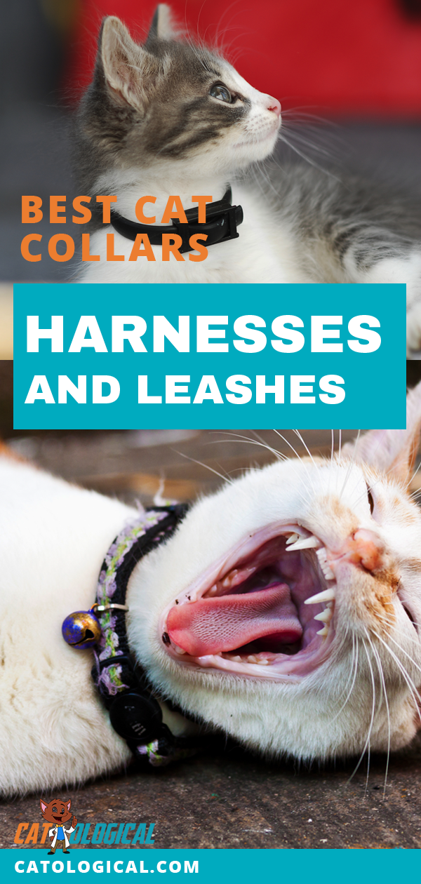 Check Out The Safest And Most Comfortable Leashes Collars Harnesses We Could Find With This Informative Fun Article On Best Cat Accessories