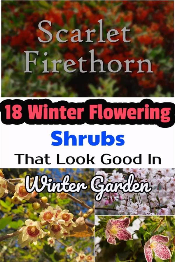 Photo of 18 Winter Flowering Shrubs That Look Good In Winter Garden