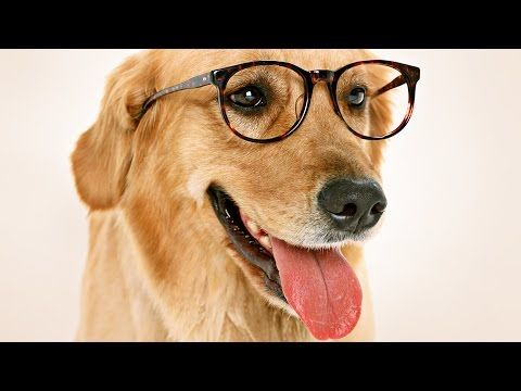 Inside A Dog S Brain Do Dogs Understand Time Youtube Dog