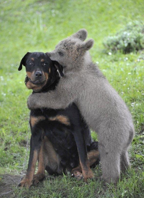 Most Inspiring Koala Bear Chubby Adorable Dog - debd6df5133305ba00bf23bee08a4910  HD_721578  .jpg
