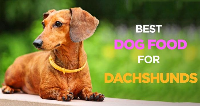 Best Dog Food For Dachshunds Nutritionally Balanced Diet For Wieners Best Dog Food Weiner Dog Puppies Weiner Dog Humor