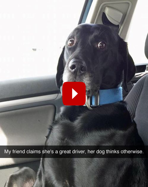 Compilation Video Of Funny Dog Scared Random Things