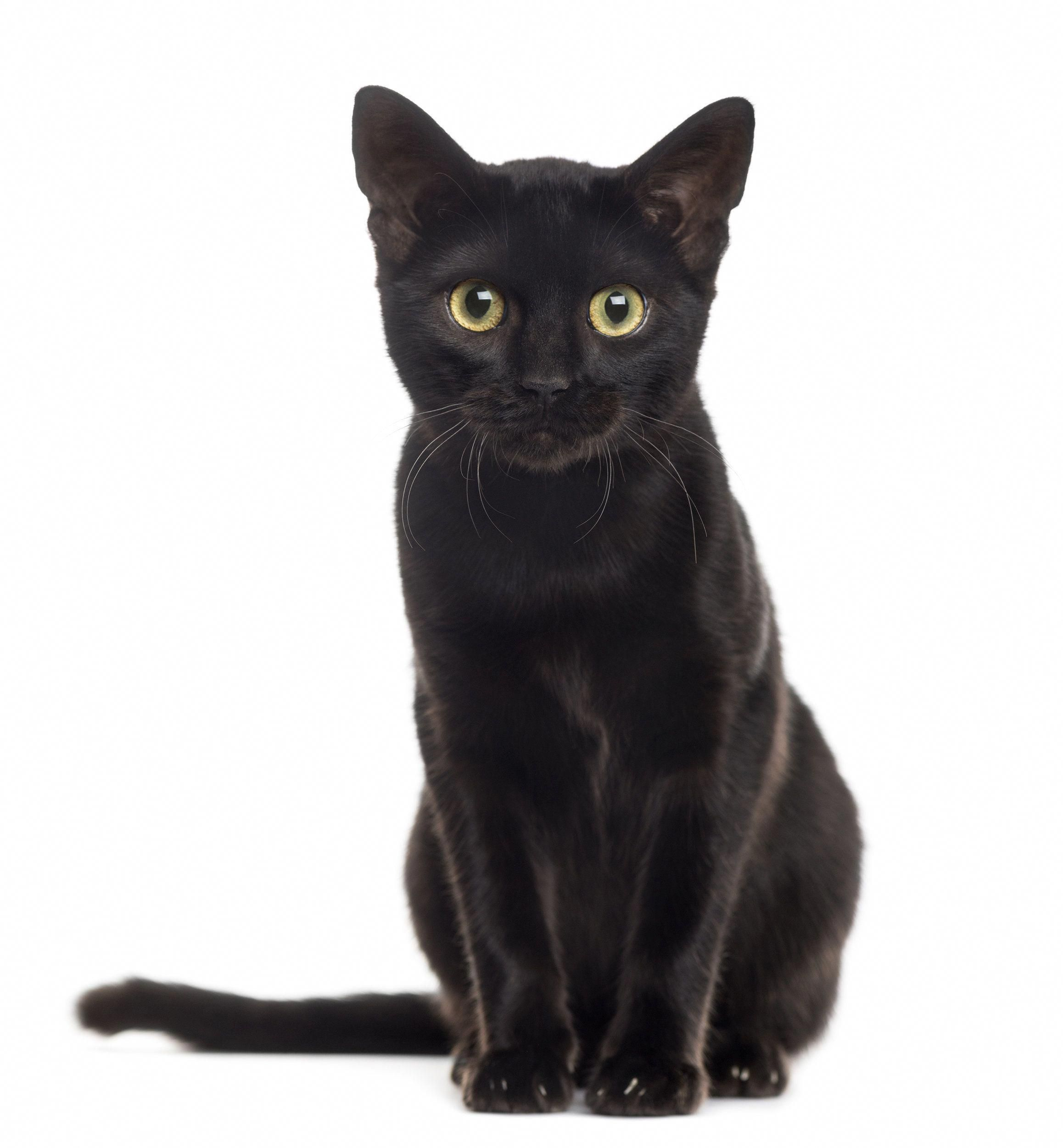 Stop Hating On Black Cats It S National Black Cat Day Huffpost Blackcats Black Cat Day National Black Cat Day Black Cat