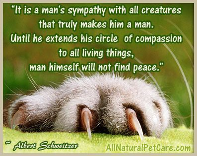 Related Image Love For Animals Quotes Animals Animal Rescue Pets