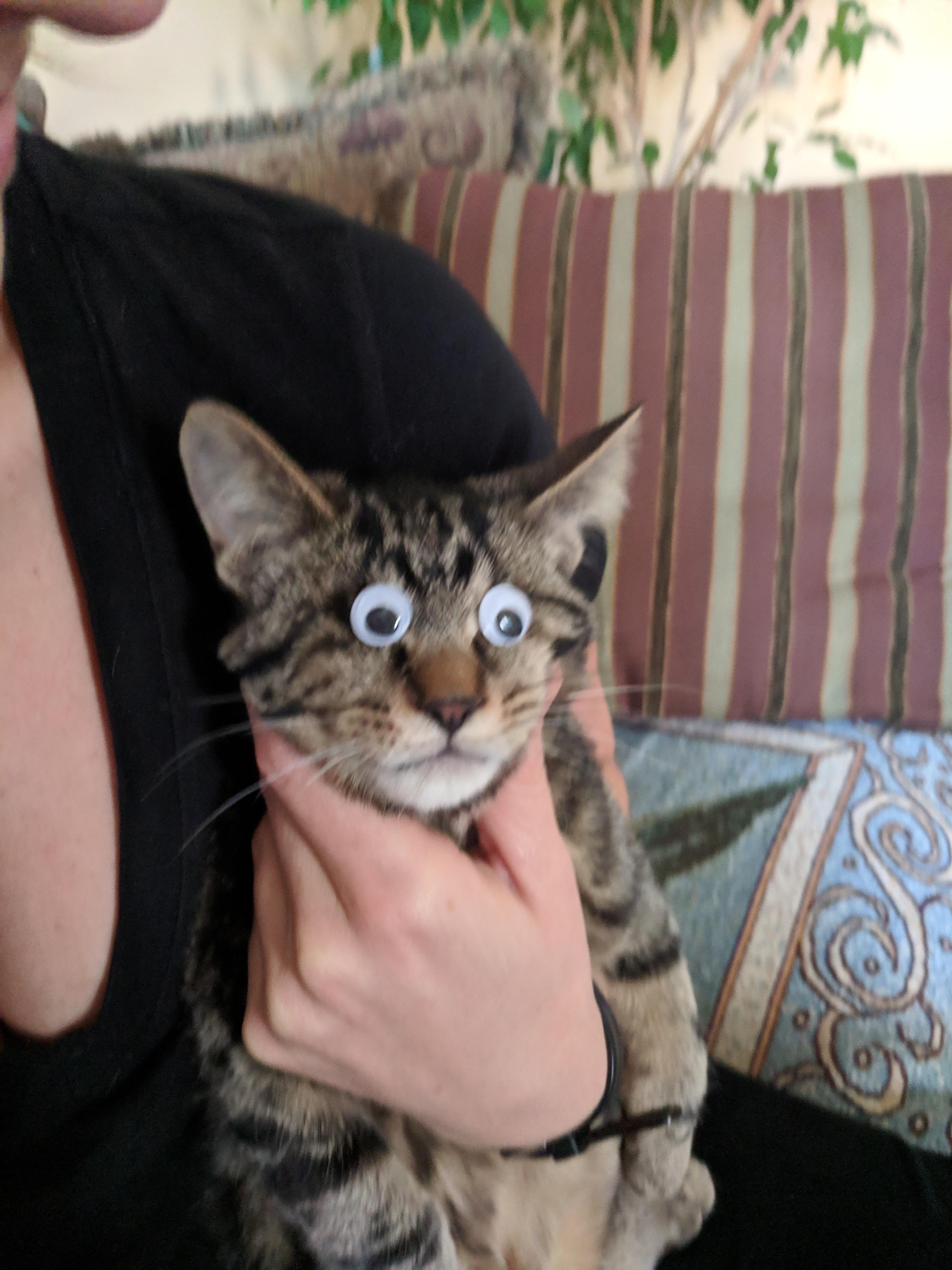 Googly eyes for our blind kittenhttps//i.redd.it