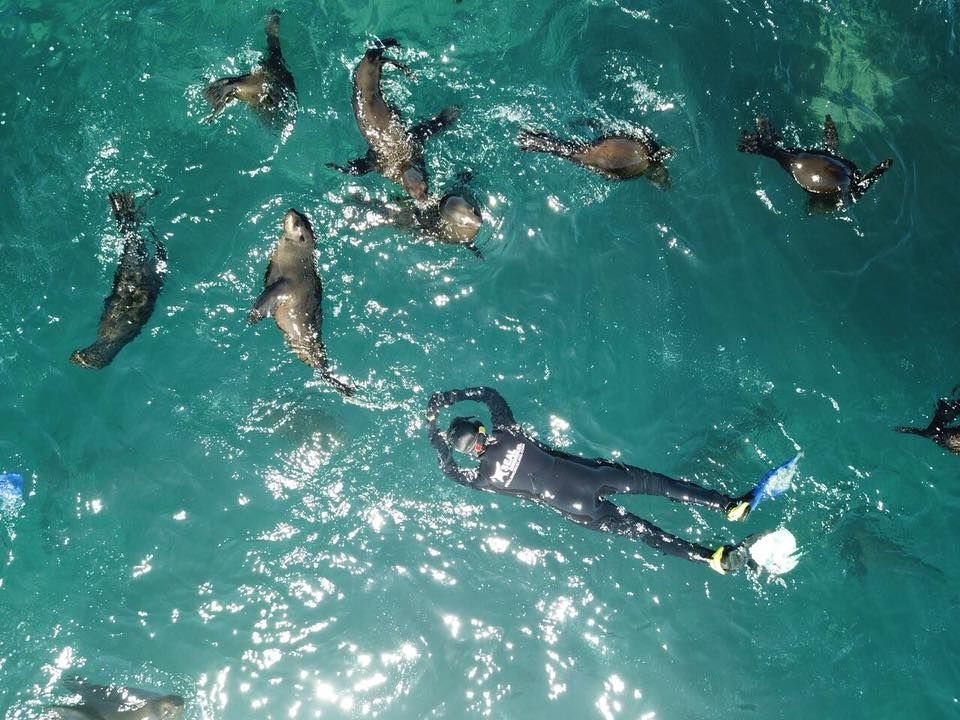 Swim With Seals In Cape Town In 2019