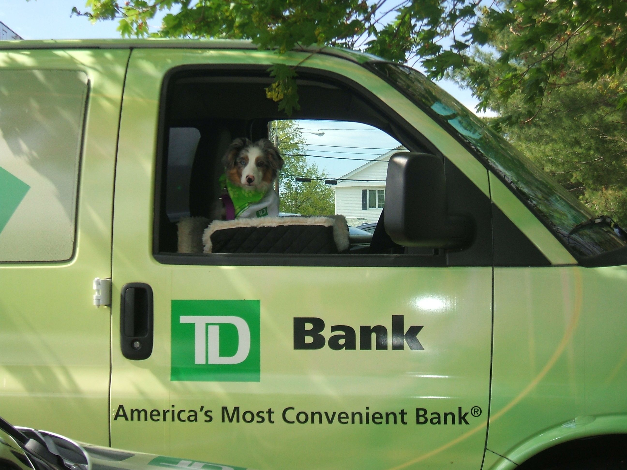 Sydney loves rides in the TD Bank WOW! van -windows down of course