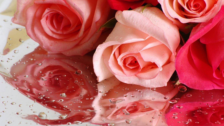 beauty flower: beautiful flowers wallpaper | jardines | pinterest