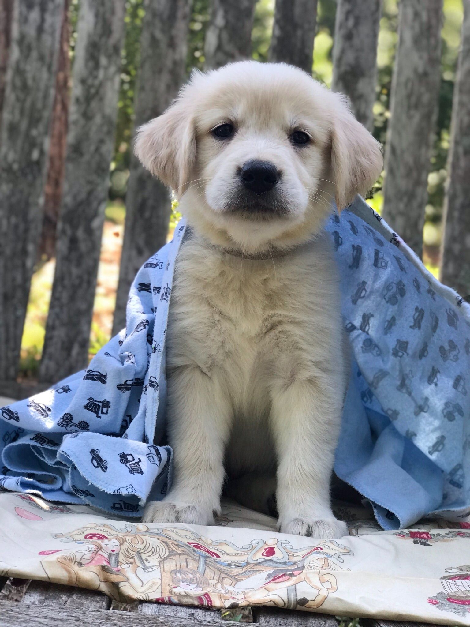 Melissa Weldon Noel Bells Puppy Resort Has Golden Retriever