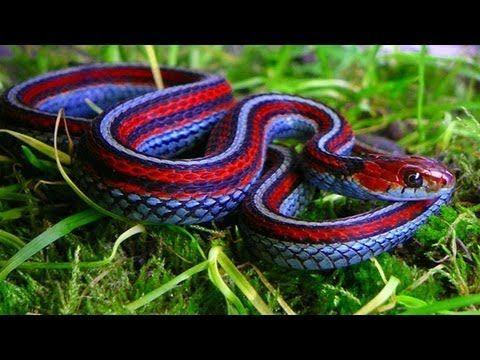 Snake Bite Minimise The Risk Chandler Macleod Group Limited