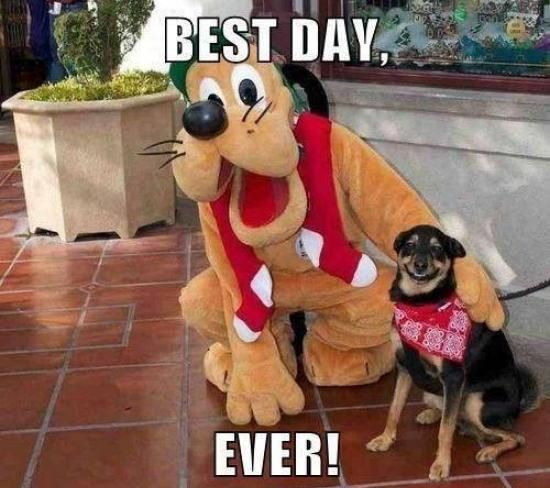 Best Day Ever Cute Animals Dogs Disney Adorable Dog Puppy Animal Pets Goofy Funny Animals Funny Pets Funny Dogs Funny Dog Faces Cute Animal Memes Funny Animals