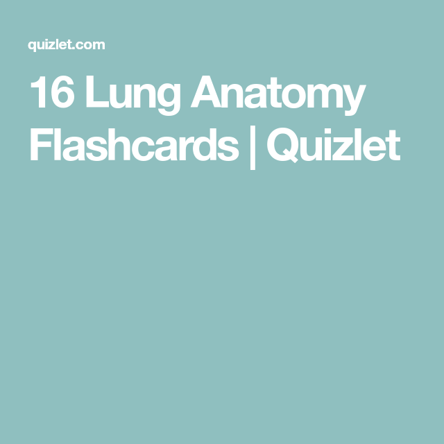 16 lung anatomy flashcards quizlet anatomy pinterest lungs 16 lung anatomy flashcards quizlet ccuart Image collections