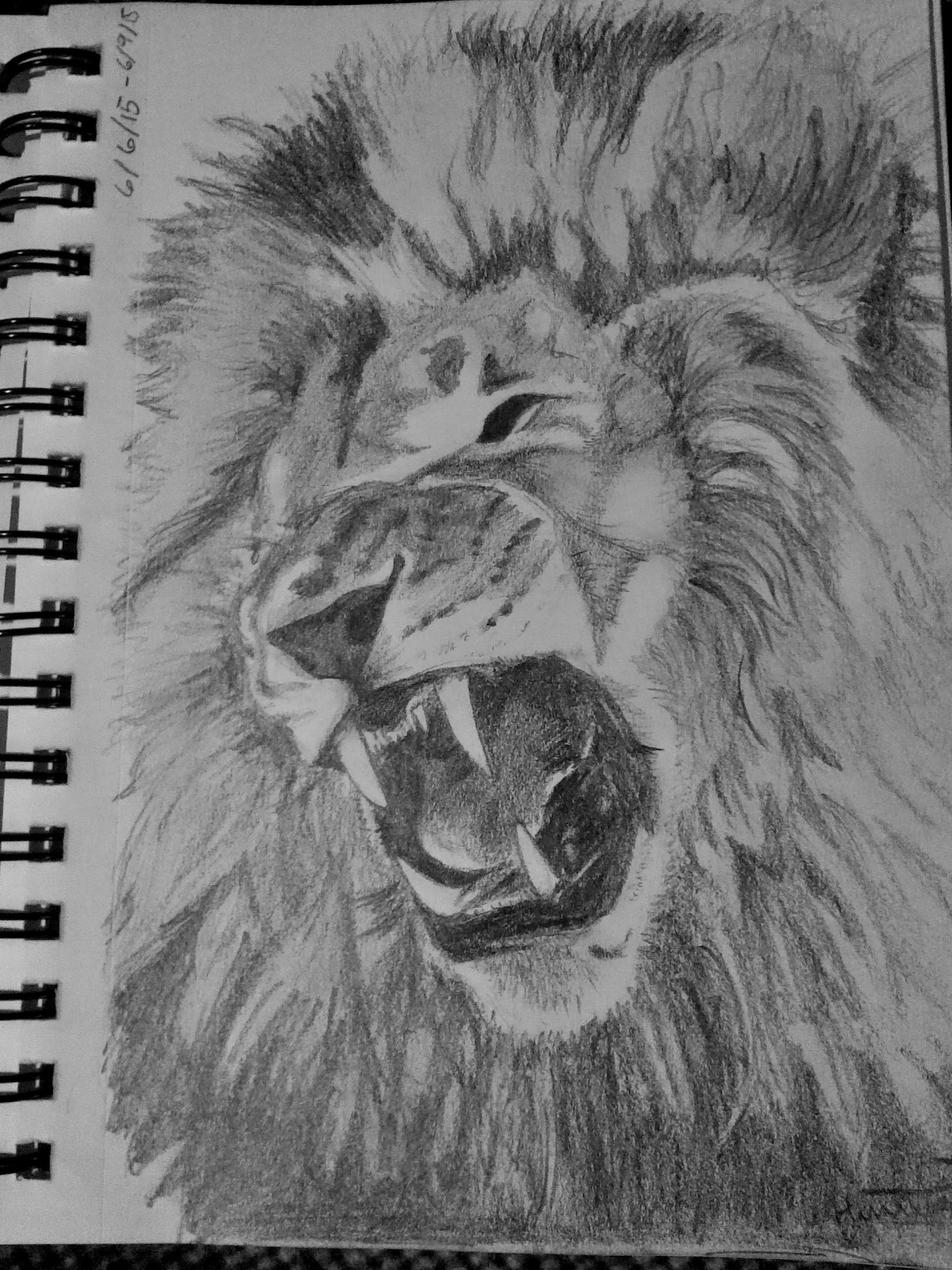 Roaring lion pencil drawing by hannah thuemmel 2015