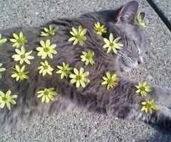 Cat x