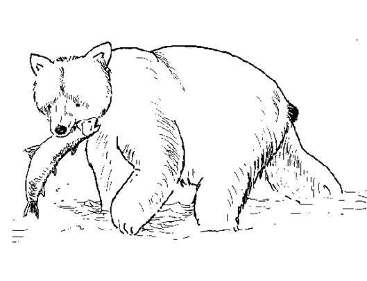 Grizzly Bear Coloring Pages | Coloring Page