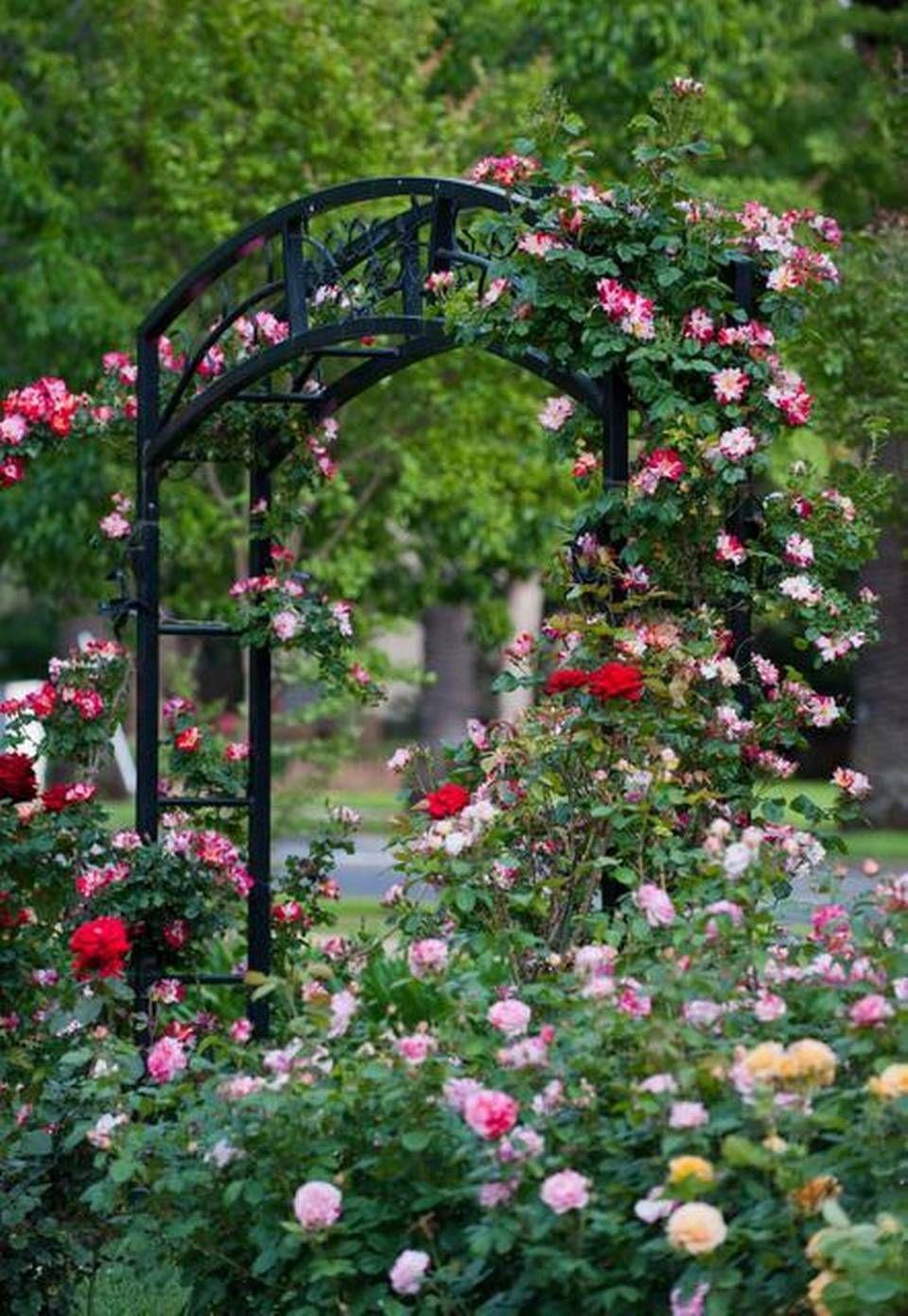 Lower Cost Mckinley Rose Garden In East Sacramento Mckinley