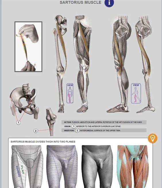 본문 이미지 | 그림 참고 | Pinterest | Anatomía, Anatomía de pierna y ...