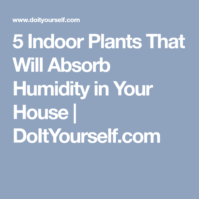 5 Indoor Plants That Will Absorb Humidity In Your House   DoItYourself.com